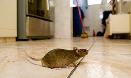 Alat penjepit tikus